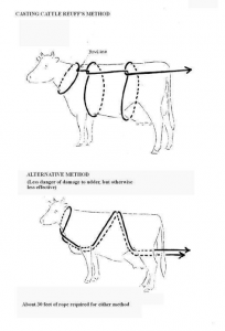 Casting cow